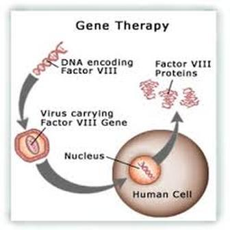 gene therapy pros and cons Gene patenting pros and cons list list of pros and cons of gene therapy about occupytheory we are a online magazine that focuses on important issues related to the occupy movement.