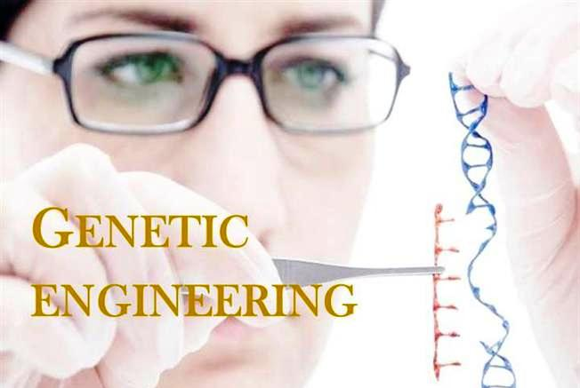 Genetic Engineering Pros and Cons in Humans